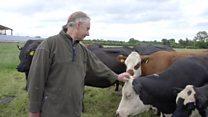 O criador de gado vegetariano que decidiu salvar suas vacas do abatedouro