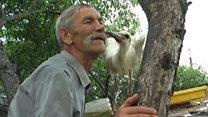 Ось така любов: мешканець села прихистив лелеку