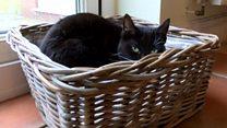 Cancer-nursing cat scoops national award