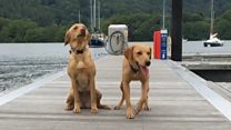 Training canine crime scene investigators