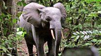 British army on elephant-saving mission