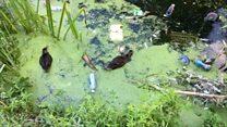 Litter in river 'endangering wildlife'