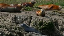 Seals given rust orange 'makeover'