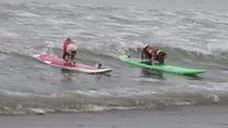 ရေလွှာ လှိုင်းစီးတဲ့ ခွေးများ