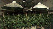 Secret bunker cannabis growers jailed