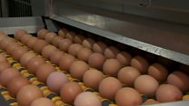 تخم مرغهای آلوده در اروپا