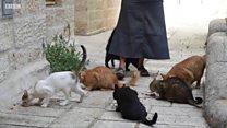 """""""Не зовите меня кошатницей"""": как Това Сауль помогает кошкам Иерусалима"""