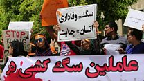 نگرانی از افزایش تعداد سگهای ولگرد در ایران