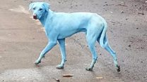 Mumbai's blue dogs