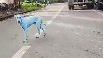 El misterio de los perros azules de India
