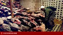 厄瓜多尔抗议中国渔船涉非法捕捞鲨鱼