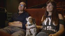 Watch: Dogs + Movies. The pawfect night out?