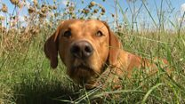Over a million dogs in the UK suffer from hay fever