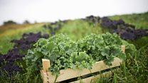 المزارع الأمريكية الصغيرة: صراع البقاء