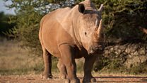The man who wants to sell rhino horns