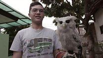 นกฮูกต้องคำสาปแฮร์รี พอตเตอร์ในอินโดนีเซีย?