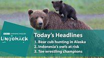 Com fim de restrições, caça de ursos é retomada no Alasca