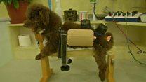 آزمایش طب سوزنی روی حیوانات خانگی