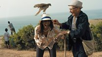 What happens at a falconry festival?