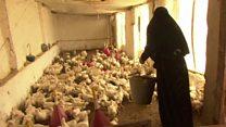کسب و کار زن روستایی با مرغ