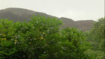 Brwydr Eryri â'r rhododendron