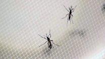 Комарів може вбивати потяг до солодкого