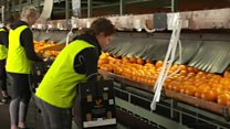 Is Australia running out of oranges?