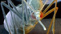 Убивать комаров поможет их тяга к сладкому