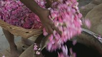 Как в Индии создают духи, которые ни на что больше не похожи