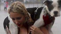 Hurricane Harvey: Saving displaced pets