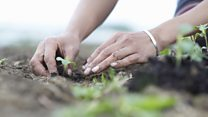 ما معنى كلمة gardening؟