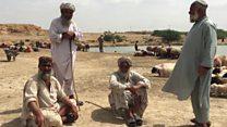 افغان قالین باف بکرے بیچنے پر مجبور