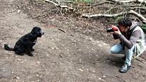 The Kenilwoof dog snapper
