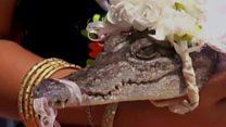 Crocodile Bride