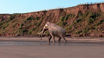Mammoth finds rival Jurassic Coast