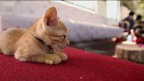 कभी देखी है आपने बिल्लियों वाली ट्रेन?