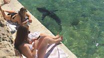 プールにサメが しばし保護された「フラッフィー」