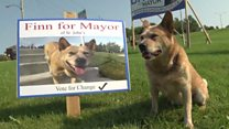 Dog running for mayor in Canadian city