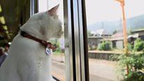 Котячий потяг: як у Японії розповідають про бездомних котів