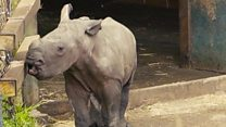 Baby rhino born at safari park