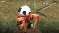 """中国明星长寿熊猫""""巴斯""""去世"""