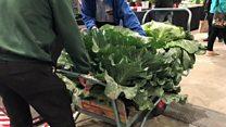 Giant vegetables at the Harrogate Autumn Flower Show
