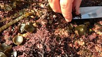 Seaweed foraging- making the sea a supermarket