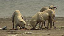 The fishermen saving Pakistan's island dogs