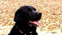 Meet Dave the hero dog