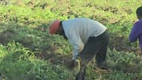इटलीतील भारतीय शेती कामगार