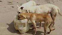 Пакистанські рибалки рятують собак на безлюдному острові