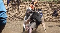Madagascar: Where men dey fight bull to find wife