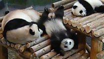 Tumbling cubs