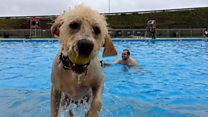 Doggy paddle comes to Saltdean Lido